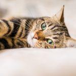 Kattenspeeltjes zijn goed voor uw kat